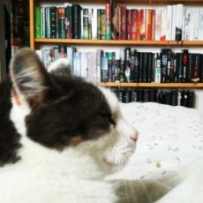 _bookish_cat_